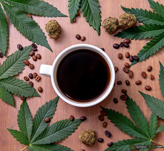 Best CBD coffee: coffee with cannabis sativa plants all around it.