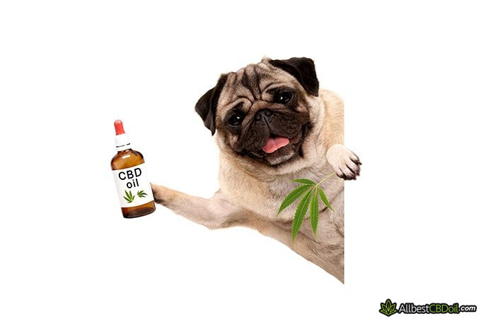Best CBD oil for dogs: a dog holding a bottle of CBD oil.