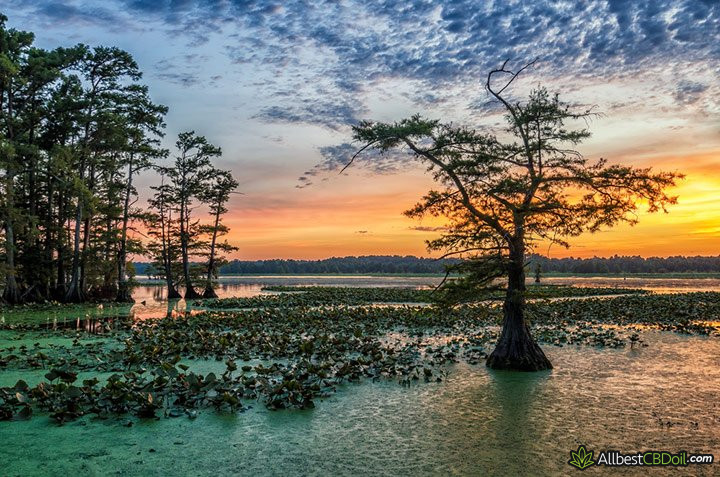 CBD oil Mississippi: Reelfoot lake.